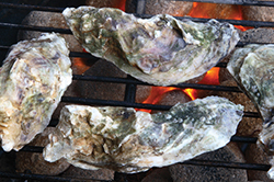 Oyster Roasts on the Outer Banks
