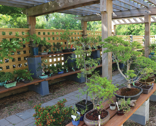 Bonsai Garden at Silver Bonsai in Manteo