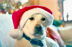 Outer Banks SPCA Santa Paws Tree Program