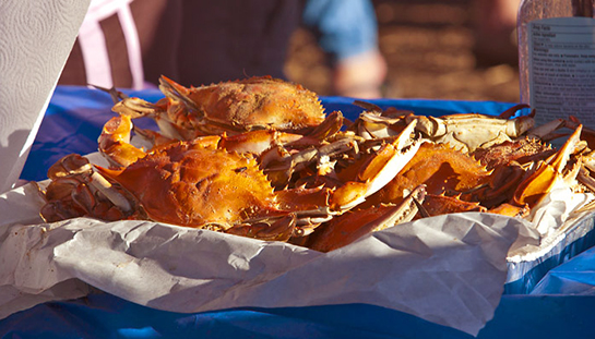 Outer Banks blue crabs