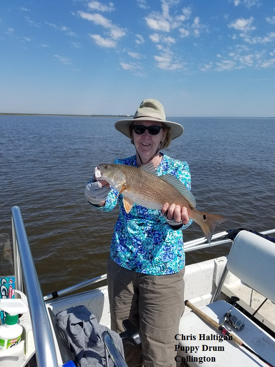 Daily fishing report june 6 2017 tw s bait tackle for Fishing report outer banks