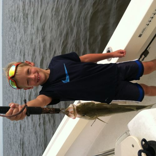 T-Time Charters, Pamlico sound rockfish