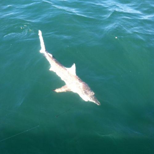 T-Time Charters, Shark bites!