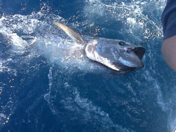 TW's Bait & Tackle, TW's Daily fishing Report. 1/20/15