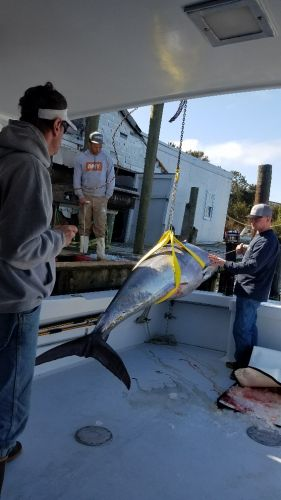 Phideaux Fishing, If you want to catch a big tuna, you better come now