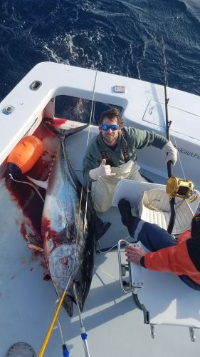 Phideaux Fishing, Big Tuna are here!!