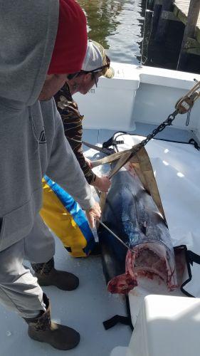 Phideaux Fishing, Yen conversion
