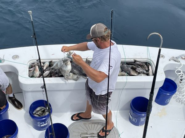 Country Girl Charters, OBX Sea Bass Fishing this Sunday