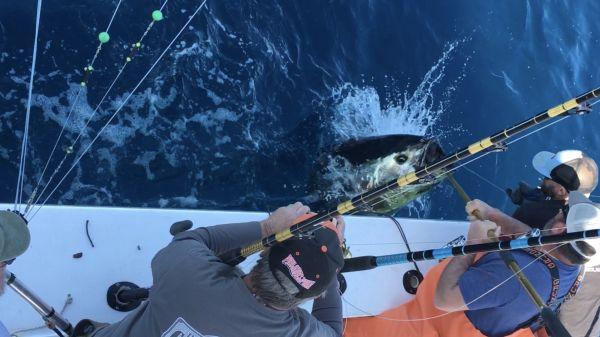Carolina Girl Sportfishing Charters Outer Banks, Bluefin & Bigeye Tuna Bite As Good As It Gets