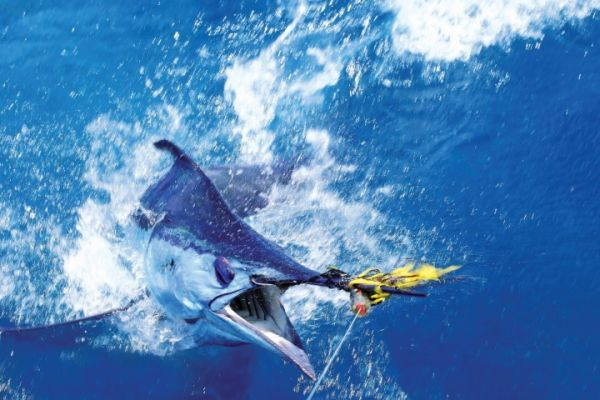Carolina Girl Sportfishing Charters Outer Banks, No fishing Today