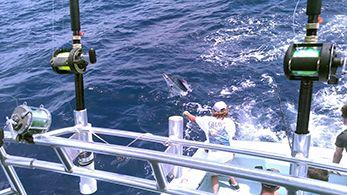 Tuna Duck Sportfishing, Good Billfishing Today