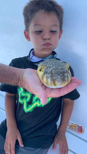 Miss Oregon Inlet Head Boat Fishing, Puffer Fish Thursday