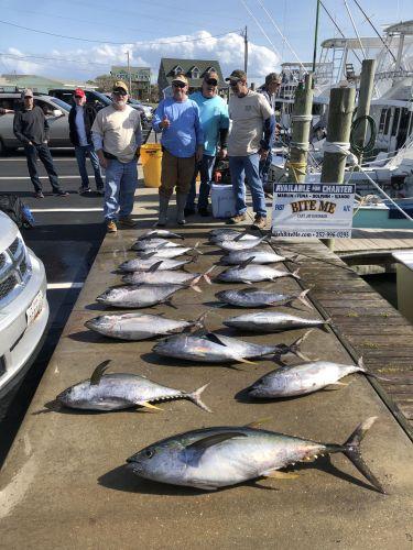 Bite Me Sportfishing Charters, Tuna Tuna Tuna!