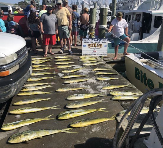Bite Me Sportfishing Charters, Father Son trip!  Lots of Dolphins!