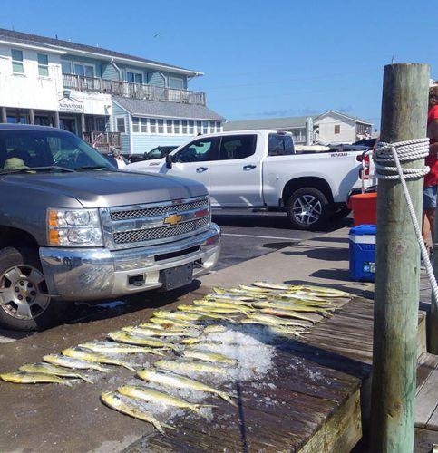 Tuna Duck Sportfishing, Many Mahi