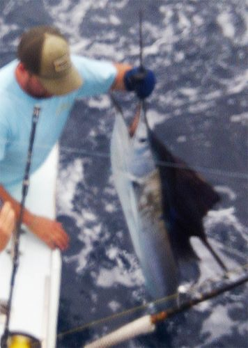 Tuna Duck Sportfishing, Billfish and Meat Fish Today