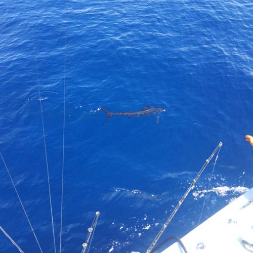 Tuna Duck Sportfishing, Sailfish and Mahi