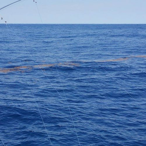 Tuna Duck Sportfishing, Mahi and Yellowfin Tuna