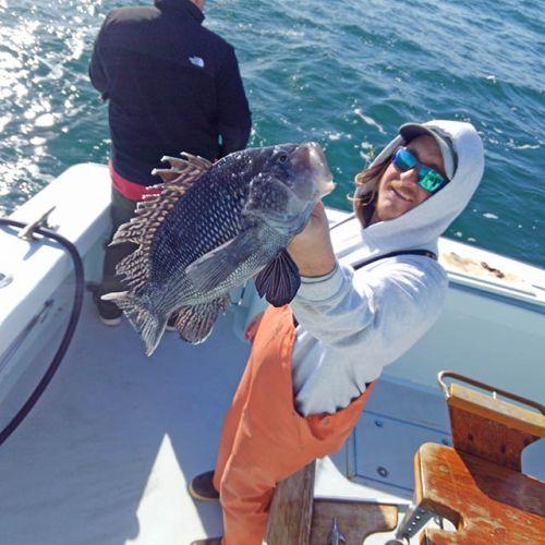 Tuna Duck Sportfishing, Sea Bass
