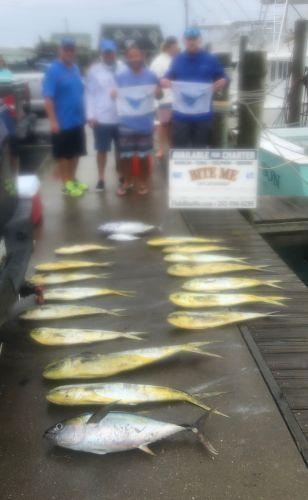 Bite Me Sportfishing Charters, Sailfish, tuna, dolphin