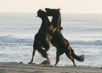 Free Wild Horse Tour