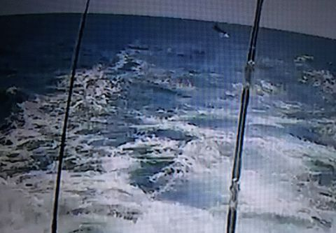 Outer Banks Fishing Reports | Outer Banks This Week