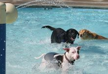 Bring your dog to the Y for a walk and a pool swim on Sat.