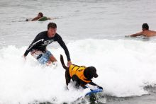 This surfing dog isn't the only one on the waves this week.