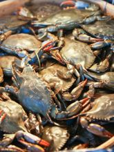 Blue crab is the star of the Blue Crab Kayak and Cook Tour.