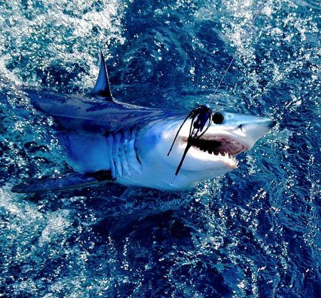 OBX Marina, A Wild catch!