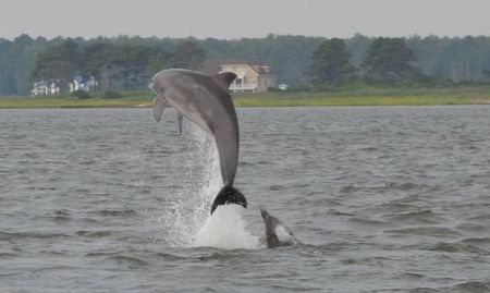 Captain Johnny's Dolphin Tours, Morning Dolphin Watch