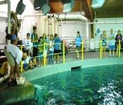 North Carolina Aquarium on Roanoke Island, Shark Exhibit Tour