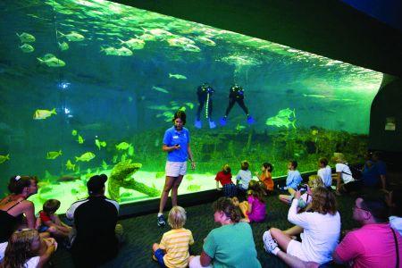 North Carolina Aquarium on Roanoke Island, Aqua Tots