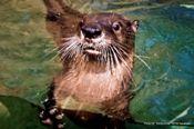 North Carolina Aquarium on Roanoke Island, Otter Quarters Tour