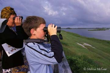Pea Island National Wildlife Refuge, BIRDING AT PEA ISLAND