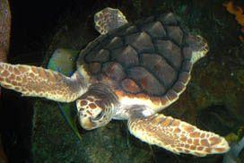 Pea Island National Wildlife Refuge, TURTLE TALKS ON PEA ISLAND