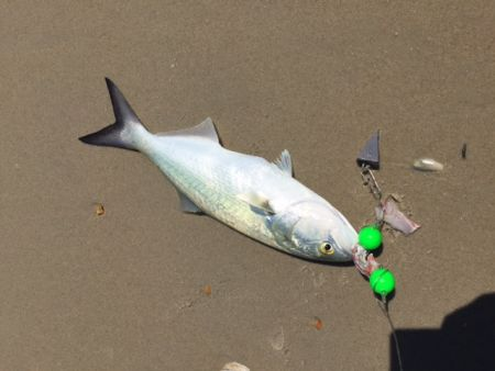 TW's Bait & Tackle, TW's Daily Fishing Report. 9/14/15