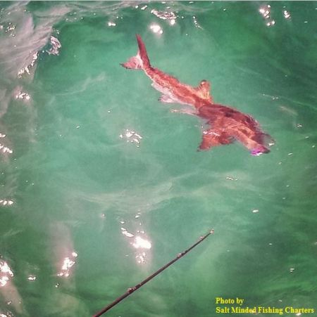 TW's Bait & Tackle, TW's Daily Fishing Report. 7/1/15