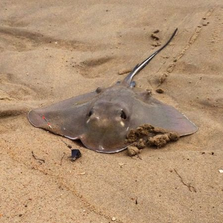TW's Bait & Tackle, TW's Daily fishing Report. 12/27/14