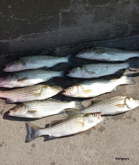TW's Bait & Tackle, TW's Daily Fishing Report.com. 8/12/15