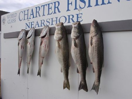 TW's Bait & Tackle, TW's Daily Fishing Report. 12/11/15