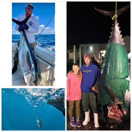 Oceans East Bait & Tackle Nags Head, A 732lb Bluefin, nice Bigeye, and an amazing underwater shot!!