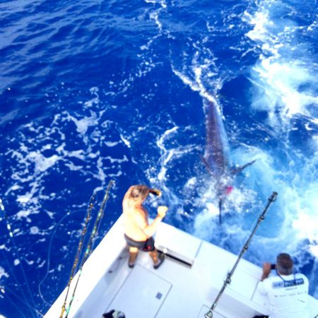 Tuna Duck Sportfishing, Five Hundred Pound Blue Marlin
