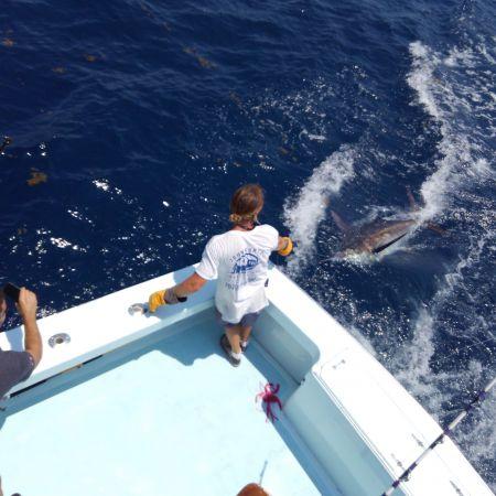 Tuna Duck Sportfishing, Wednesday's Marlin