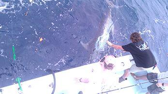 Tuna Duck Sportfishing, Blue Marlin Release
