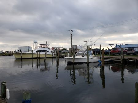 Fishin' Fannatic, Back to Business as usual here in the Outer Banks