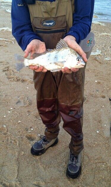 TW's Bait & Tackle, TW's Daily Fishing Report. 12/31/15