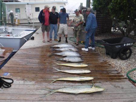 Pirate's Cove Marina, Meatfish at Pirates Cove!