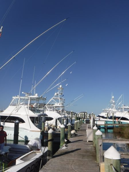 Pirate's Cove Marina, August is for Marlins