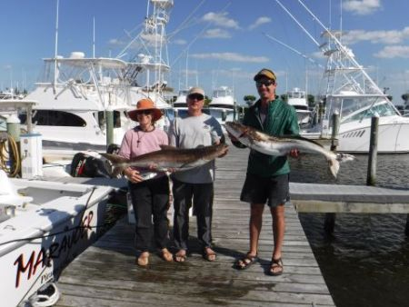 Pirate's Cove Marina, Cobia Catch!